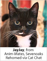 Jay Jay from Anim-Mates (Sevenoaks) - Homed