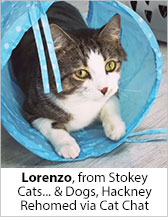 Lorenzo from Stokey Cats... & Dogs (Hackney) - Homed