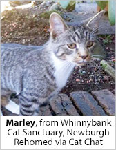 Marley from Whinnybank Cat Sanctuary (Newburgh) - Homed