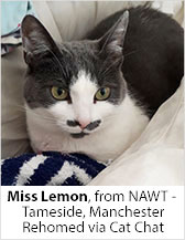 Miss Lemon from NAWT - Tameside (Manchester) - Homed