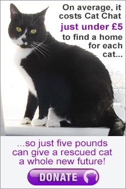 Donate to help rehome rescue cats