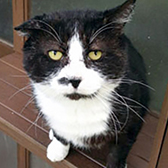 Rescue cat Bailey from Cats Protection - North Hertfordshire, Stevenage, needs a home