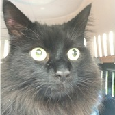 Rescue cat Frodo from Cats Protection - Harlow, Epping Forest & District needs home