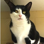 Rescue cat Boo, from Blue Cross - Cambridge Rehoming Centre, needs a home