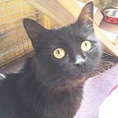 Rescue cat Coffee from Cat Action Trust 1977 - Leeds, West Yorkshire, needs a home