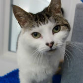 Rescue cat Doris from Cats Protection, Warrington, needs a home