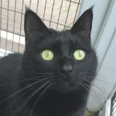 Rescue cat Jeffrey from Blue Cross, Cambridge, needs a home