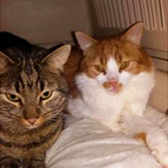 Rescue cats Mr Gru and Louie from Cats Protection South Wirral, Cheshire, Merseyside, need a home