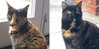 Rescue cats Pansy and Buttercup from Lincs Ark Animal Welfare, Boston, Lincolnshire, need a home