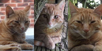 Rescue cats Spitfire, TigerMoth & PiperCub from Woodland Nook Cat Rescue - Alfreton, needs home