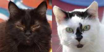 Rescue Cats Mr Tom & Coco from Feline Care Cat Rescue, Attleborough needs a home