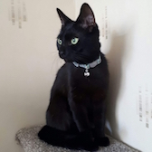 Rescue cat Shelby, at Lina's Cat Rescue, Derby needs a home