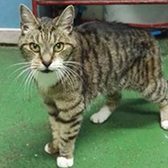 Rescue cat Max from Cats Protection - Welwyn, Hatfield and District, Welwyn, Hertfordshire, needs a home