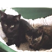 Rescue cats, Freddy and Boo, from Yorkshire Animal Shelter need a home.