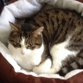 Rescue cat Andrea from Leeds Cat Rescue, North Yorkshire, West Yorkshire, needs a home