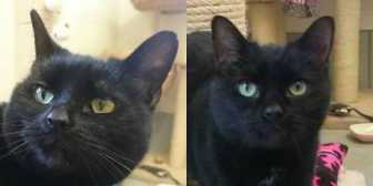 Rescue Cats Bucks & Fizz, Blue Cross - Cambridge Rehoming Centre, Cambridge needs a home