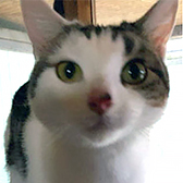 Rescue cat Sammie, at Royston Animal Welfare, Barnsley, needs a new home