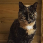 Rescue cat Tilly, from Midlands Animal Rescue Team, Walsall, needs a home