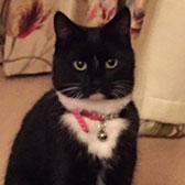 Rescue cat Florrie from The CatCuddles Sanctuary, Greenwich. London, West Kent, needs a home