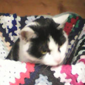 Rescue cat Jasmine from Kathy's Cat Rescue, The Wirral, Cheshire, Merseyside, needs a home