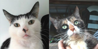 Rescue cats Poppy & Kitty from RSPCA - Macclesfield, South East Cheshire & Buxton, Macclesfield, need a home