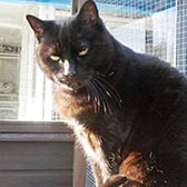 Rescue cat Solomon from Bentham and District Pet Rescue, High Bentham, Cumbria, needs a home