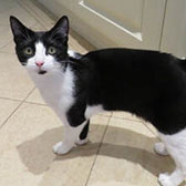 Rescue cat Malcolm from Pet Rehome, Bolton, Lancashire, needs a home