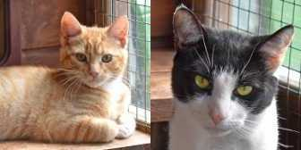 Rescue Cats George & Matty, All Animal Rescue, Southampton needs a home
