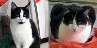Rescue cats Petal and Iris, at RSPCA - Tunbridge Wells & Maidstone, need a new home