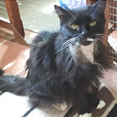 Rescue cat Nala from Cats Protection Northampton, Northamptonshire, needs a home