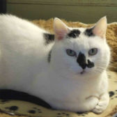 Rescue cat Toots from TAG Pet Rescue, Margate, needs a home