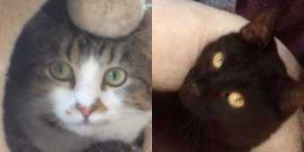 Rescue Cat Alfie & Ollie, Lancashire Paws Cat Rescue, Bolton and Bury needs a home