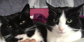 Rescue cats Nala & Chi Chi Poo from Cat Action Trust - Lanark and Central, Lanark, Central Scotland, Lothian, Strathclyde, need a home