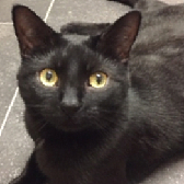 Rescue Cat Rufus from Willows Cat Adoption Centre, Tyne and Wear, needs a home