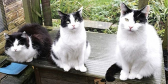 Rescue cats Skye, Kuba & Pippafrom Pawprints Cat Rescue, Bradford, West Yorkshire, need a home