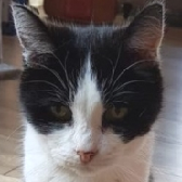 Rescue Cat Jessy from Brinsley Animal Rescue, Nottingham needs a home