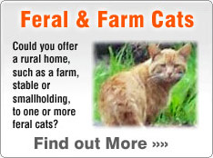 adopt a feral cat from a rescue shelter