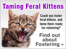 Fostering and Taming Feral Kittens