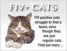 Adopt an FIV Positive Cat