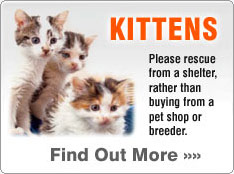 Adopt a kitten from a rescue centre