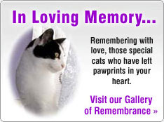 Remembrance Gallery for Cat Tributes
