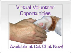 Current Volunteer Vacancies at Cat Chat