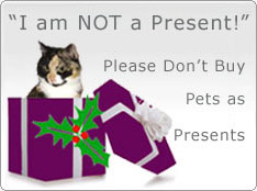 Don't buy pets as Christmas presents